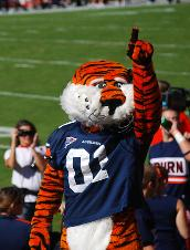 Aubie Raises Tiger Spirits This costumed mascot first appeared on the University's program cover in 1959
