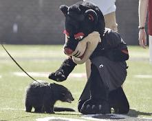 bearcat3