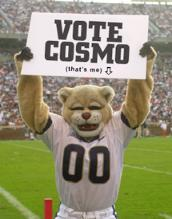 A common site at BYU's LaVell Edwards Stadium is BYU's mascot, Cosmo the Cougar.