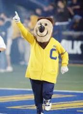 Cal's Top Supporter Oski has been serving the University since 1941.