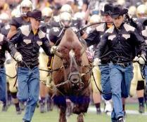 The great CU Ralphie Mascot tradition is now romping through the Pac 12 Conference