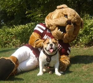 Bulldog fans enjoy a double-dose of Bully on football Saturdays when a costumed Bully joins the MSU cheeer squad to cheer MSU to another victory.