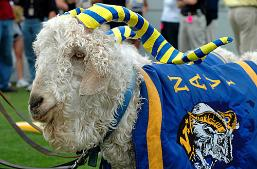 Navy's Goat mascot always points toward the opponents end zone.