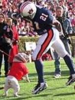 "Georgia mascot ""Uga"" was chomping with excitement to get a piece of this Auburn player."