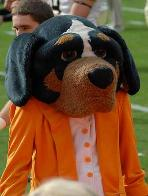 You Ain't Nuthin' But a Hound Dog! Since 1953 the Smokey tradition at Tennessee has given fans plenty howl about. The Bluetick hound first filled the University's mascot role and was followed by the costumed Smokey mascot.