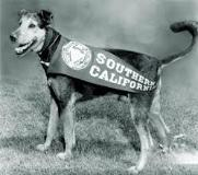 Dog Day Afternoon Before the days of Traveler, USC was represented by a dog mascot.